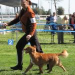 nicholas in ring - male toller