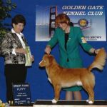 nicholas in show - male toller